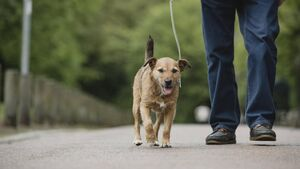 City Hall considering designated dog walking area where dogs could be left off a leash