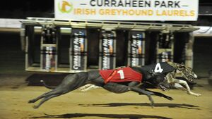 Spotlight is on Curraheen Park for the €30,000 Irish Greyhounds Laurels final