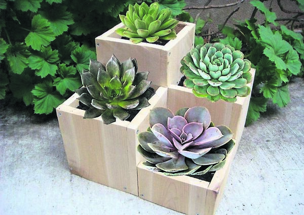 Wooden planters come in all shapes and sizes, seen here as home to succulents