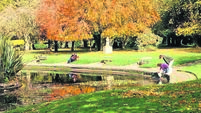 Kathriona Devereux: The science behind glorious autumn hues