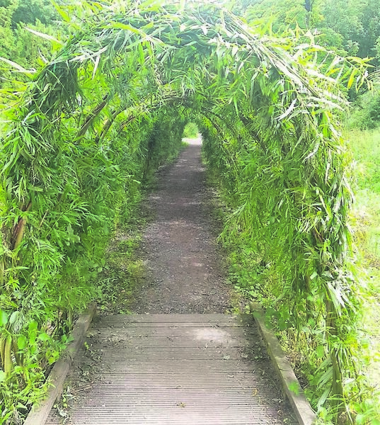 Willow tunnel at Blarney Castle Gardens.