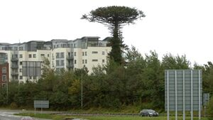 Calls for Cork 'landmark' tree to be kept local after it came crashing down during Storm Ellen