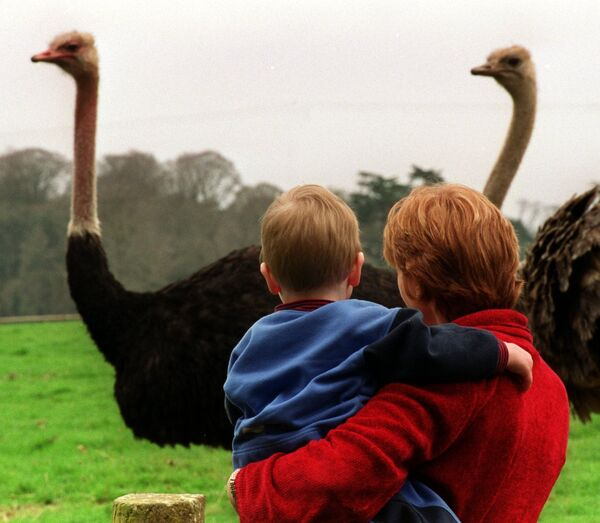Observing the ostriches, Fota Wildlife Park, 2000.