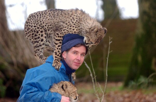 Tony O'Dwyer, Operations Manager of Fota Wildlife Park, playing with Zulu and Impie two of the three baby Cheetahs who were born in October 2003. Picture: Dan Linehan