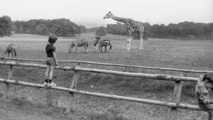 Pictures: A look back at the origin story of Fota Wildlife Park