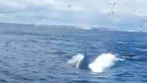 Watch: Remarkable footage captures moment whale passes underneath West Cork vessel