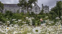 UCC team create haven for wildlife in heart of Cork city