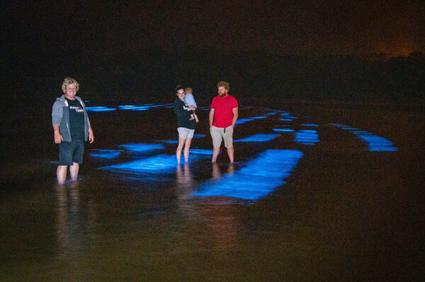 Paddy Quinlan, Funkytown Adenture Centre, Caroline Burgess, Turlough (aged 1) and Denis Cronin, Cronin's Pub, Crosshaven wading the bioluminescence glowing in the water on Fountainstown Beach, Co. Cork on ionday night. Photo Joleen Cronin