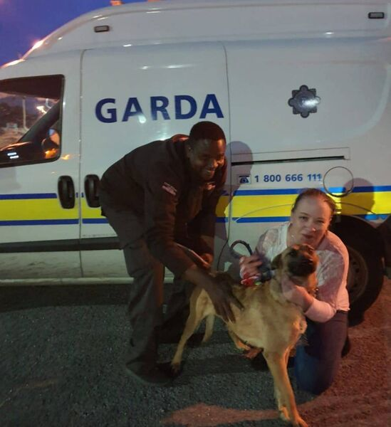 A dog, stolen from his owner in Cork last months was recovered in Kilkenny by Gardaí. Picture credit: Garda Facebook page.