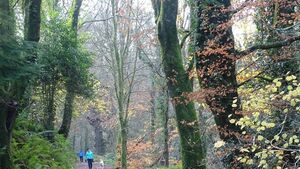 City Hall told popular forest should be handed over for public amenity to prevent tree felling