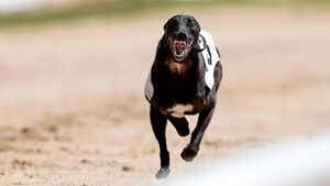 Greyhound trainers delighted to get back on the track at Curraheen and Youghal