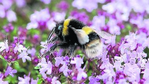 Kathriona Devereux: Let it bee... how to turn your garden into a wildlife paradise