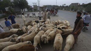 Pakistan bans open-air livestock markets in cities ahead of Eid
