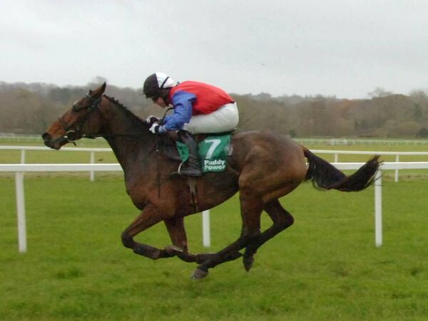 Johnny Allen riding 'Wilde Wit Pleasure' to win at Mallow races. Picture: Richard Mills