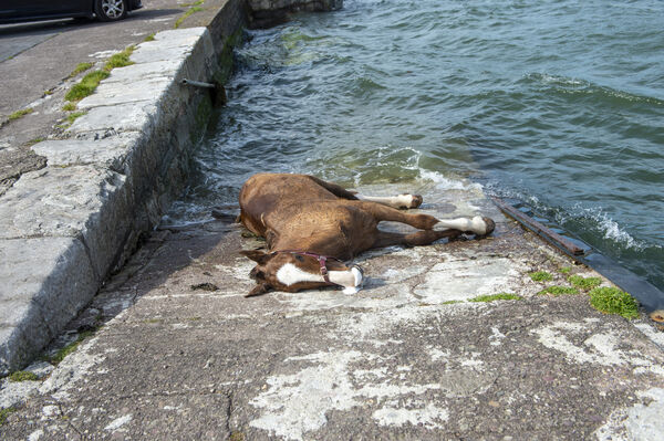 Gardai attended a scene where a horse drowned in the water at the pier in Blackrock, Cork City. Picture Dan Linehan