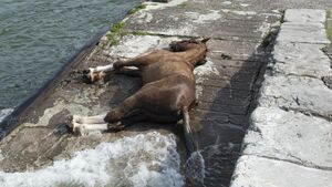 Horse was 'under control' of owner before drowning, say Cork Gardaí
