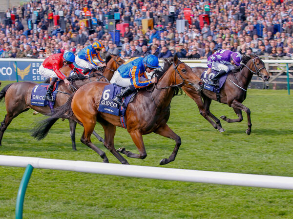 Hermosa and Wayne Lordan win at Newmarket. Picture: Healy Racing.