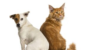 Public urged to check on elderly living with pets