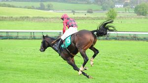 Bandon trainer James Dullea's horses are thriving in the heavy conditions