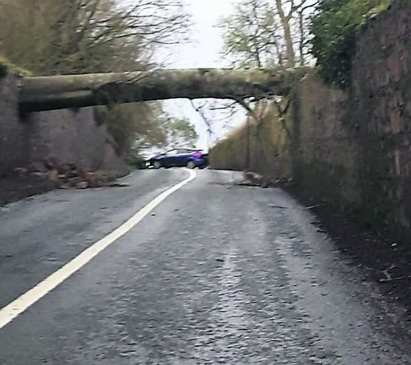 A tree down on the Mill Hill road approaching Kilworth village. Picture: Jason Frewen