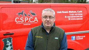 Dogs in Cork have been burnt and hung but reports of animal cruelty are declining