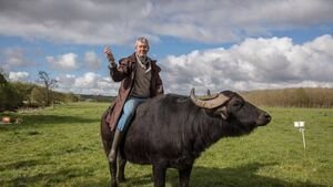 International cheese award for Cork's buffalo farmer