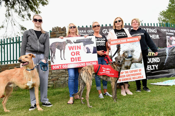 Michelle O'Connor, Pamela O'Sullivan, Rachel Murphy, Angela O'Brien and Niamh Hodge with dogs Ollie and ex-racer Molly. Pic; Larry Cummins