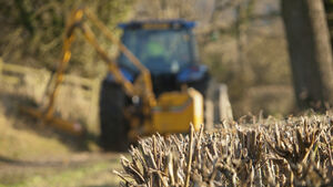 Green Party wants a reassessment of hedge cutting guideline for Cork saying hedgerows are being pulverised