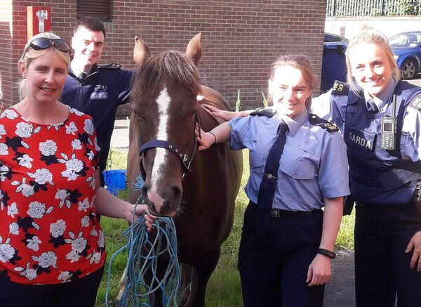 The stolen pony was recovered by Gardaí in Cork.