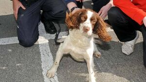 Man jailed after cannabis found by sniffer dog