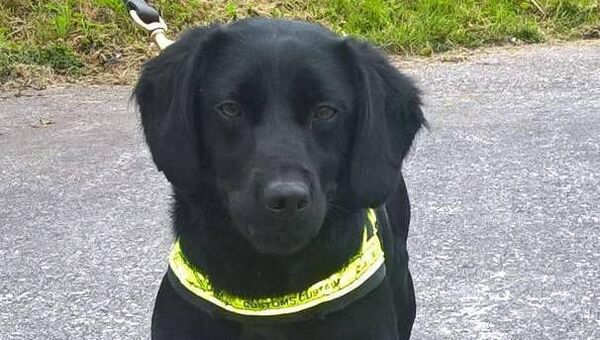 Revenue's sniffer dog Eva.