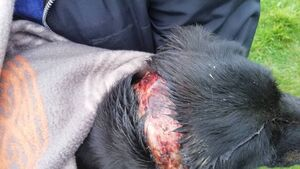Dog discovered with horrific injuries in intensive care with west Cork vet