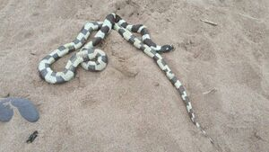 1.5-metre long snake removed from Cork beach