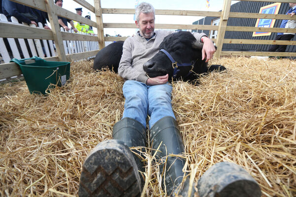 CARING: Johnny with a water buffalo at the National Ploughing Championships in Tullamore last year