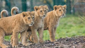 Revenue up at Fota Wildlife Park despite fall in visitor numbers