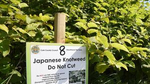 Concern over knotweed on private lands