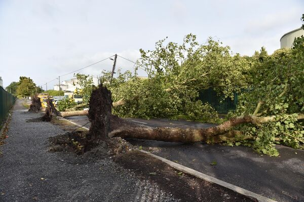 Trees felled by Storm Ali on Cork City's Marina Pic Michael Mac Sweeney/Provision