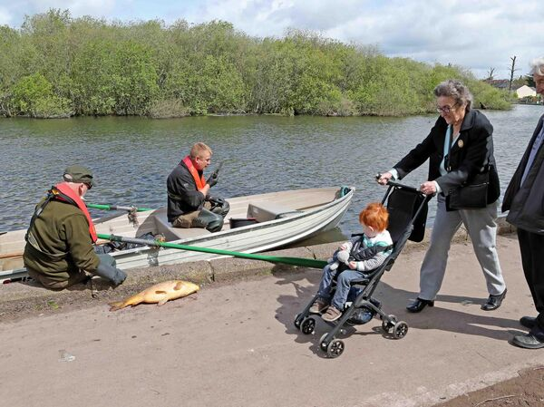 Dermot Long and Sean Cremin, of Inland Fisheries Ireland on The Lough, watched by walkers, as they remove dead carp from the amenity.Picture: Jim Coughlan.