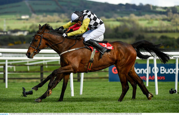 Next Destination with Paul Townend up. Picture: Seb Daly/Sportsfile
