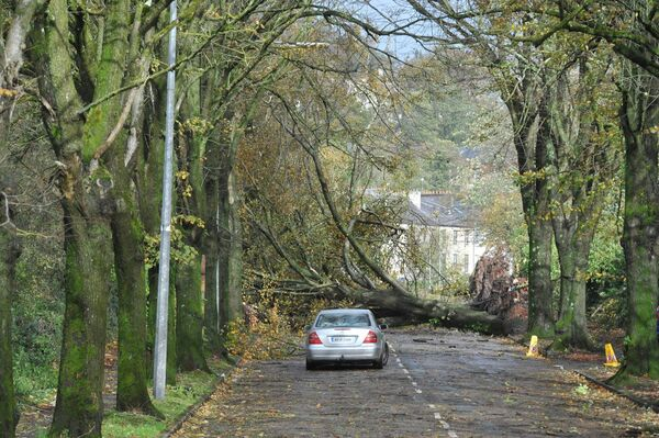 A fallen tree blocks the road on the northern end of Centre Park Road. Pic; Larry Cummins