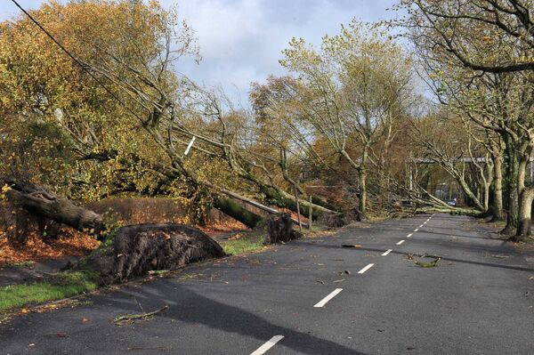 Fallen trees on Centre Park Road after the high winds knocked approximately 27 mature trees along the length of the road. Pic; Larry Cummins