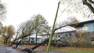 Cork's Centre Park Road devastated by 27 fallen trees