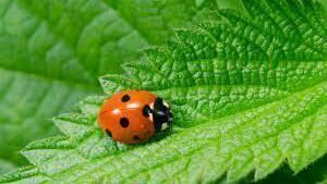 Fota seeking your help with project on ladybirds