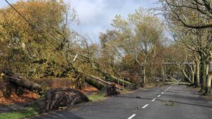 City loses more than 500 trees in storm Ophelia