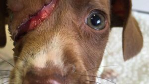 Plea for donations to help abused puppies