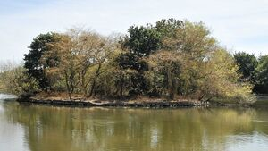 Study to examine dying foliage at Atlantic Pond