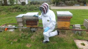 I got a great buzz out of visit to bee keeper's honey paradise