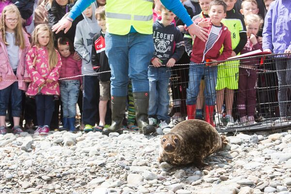 Crowds gathered at Fountainstown beach, Crosshaven to see Seals Pearl and Pumbaa being released back into the wild by Seal Rescue Ireland on what is the first Cork release of the season. Picture. Darragh Kane