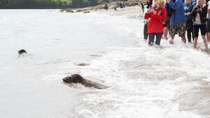 Fountainstown release raises Seal Rescue profile