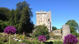 Tragic death at Blarney Castle